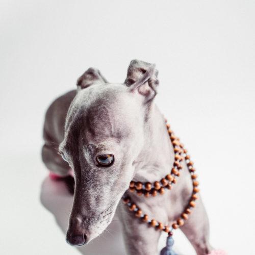 Becoming Vegan - Yoga Dog Ethel - Rachael Smith Yoga